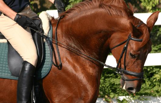 Pferd mit Sperrriemen